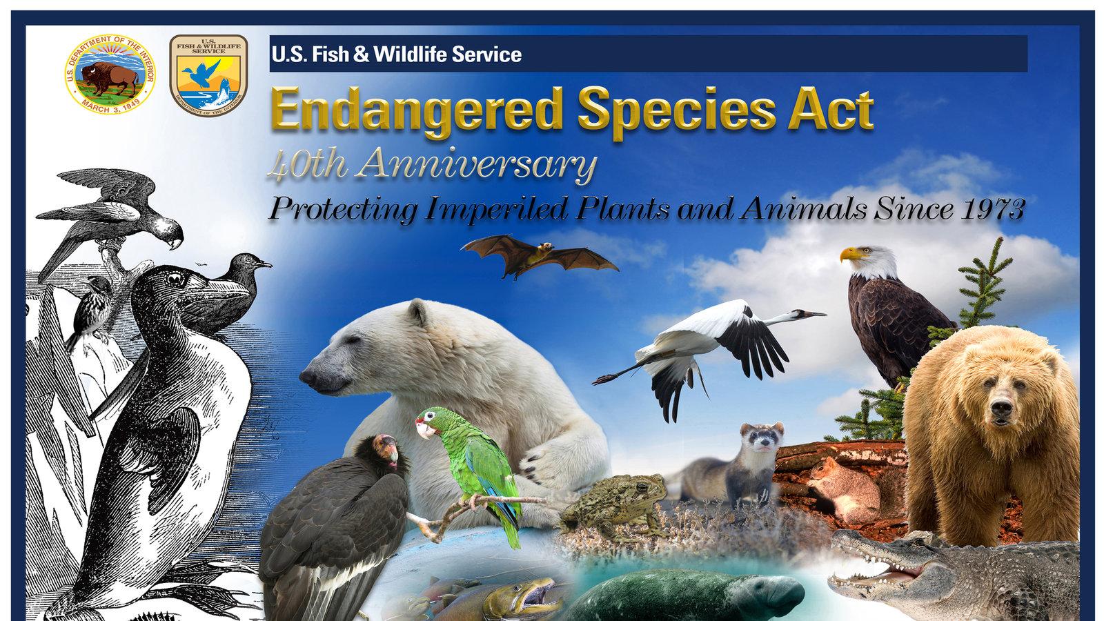 fotomontaggio colori, animali in via estinzione, orsi, volatili, pesci, mammiferi marini, roditori, intestato endangered species act, 40o anniversario
