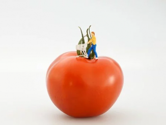 On a white background stands a red tomato on top of which rests the stylized miniature of a man in the act of pushing a shopping cart.