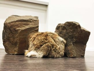 An object that breathes: the art of Günter Weseler, two rocks and an insert of animal fur.