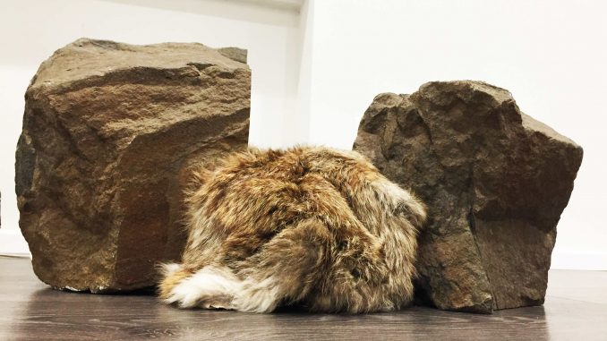 Un oggetto che respira: l'arte di Weseler, due rocce e un inserto di pelliccia animale.