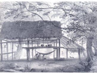 l'immagine consiste in un disegno a matita di una capanna di foglie e legno nel mezzo della foresta amazzonica, con alcune persone presenti all'interno
