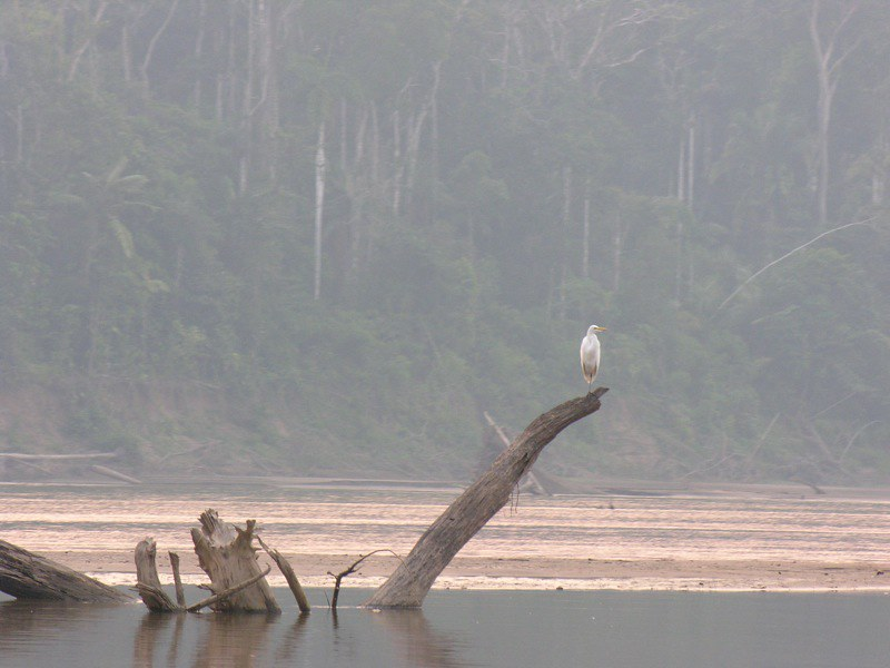 nella foto a colori si vede sullo sfondo la foresta amazzonica e, in primo piano, uno specchio d'acqua con alcuni tronchi che galleggiano