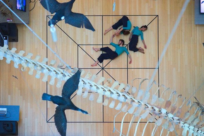 l0immagine mostra tre persone vestite con maglia blu e pantaloni neri, scalzi, adagiati su un pavimento legnoso segnato da un reticolo nero. sopra di essi sono visibili degli uccelli ed una coda scheletrica di un dinosauro