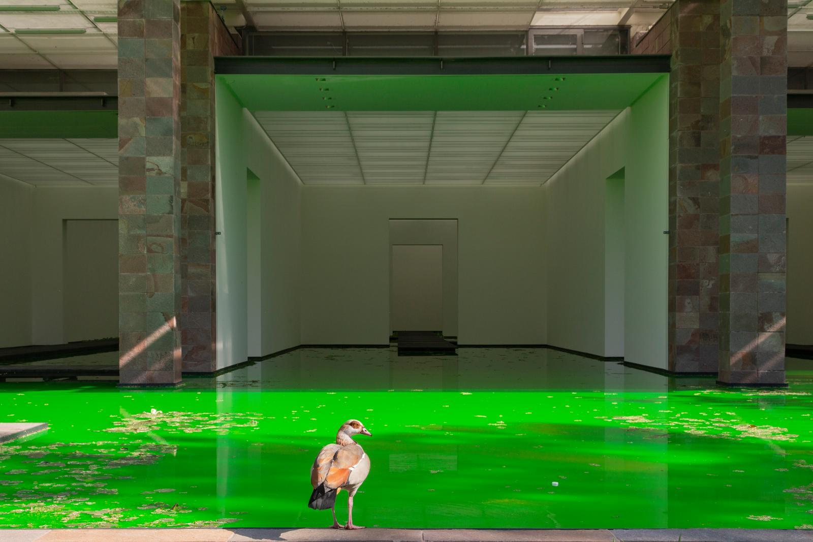 Green water insede a building tat is an open space, non doors and window; a bird in close-up shot